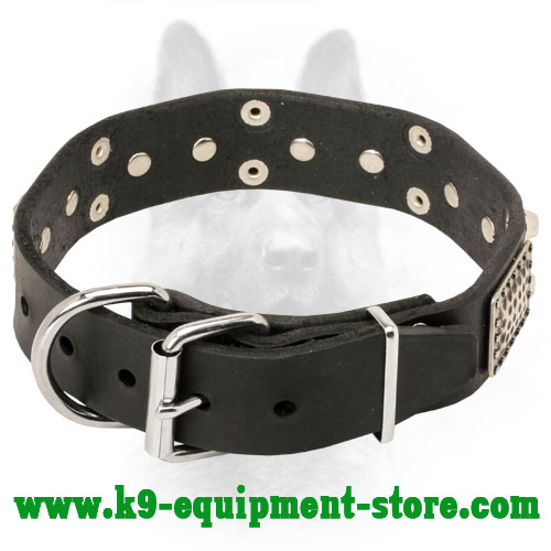Leather Canine Collar with Steel Nickel Plated Rivets