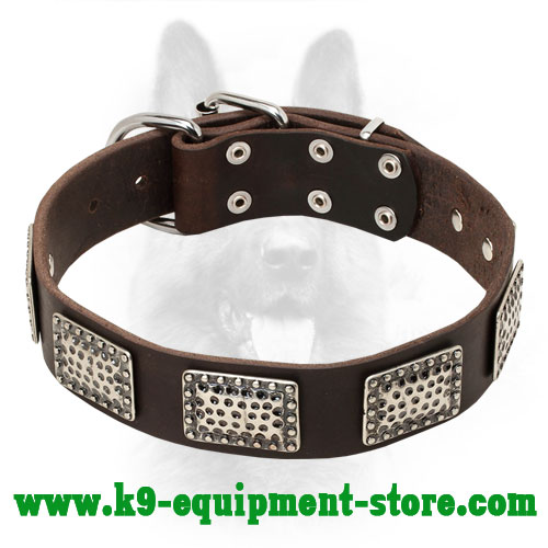 Leather Collar for Canine with Nickel Plates