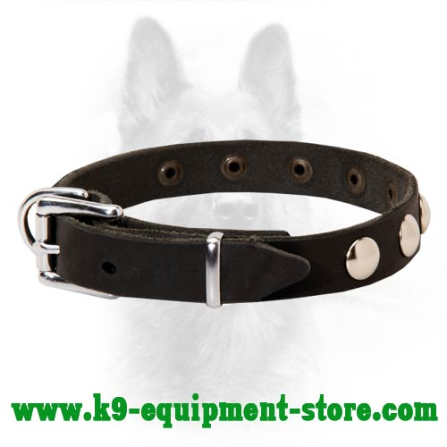 Leather Canine Collar with Steel Nickel Plated Hardware