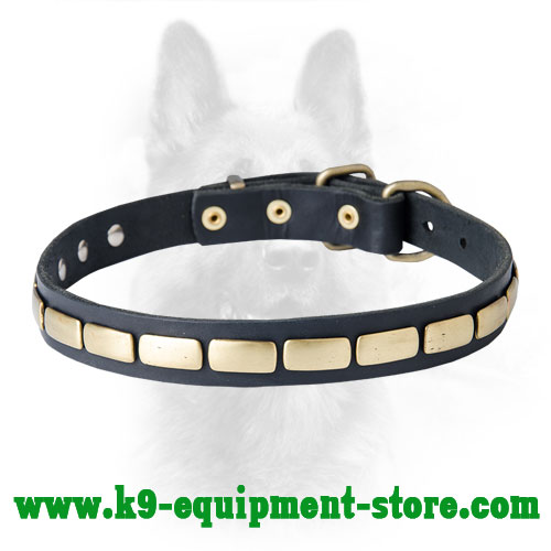 Canine Narrow Leather Collar with Riveted Plates
