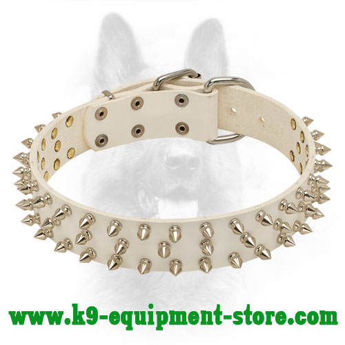 Spiked White Leather Collar for K9 Basic Training