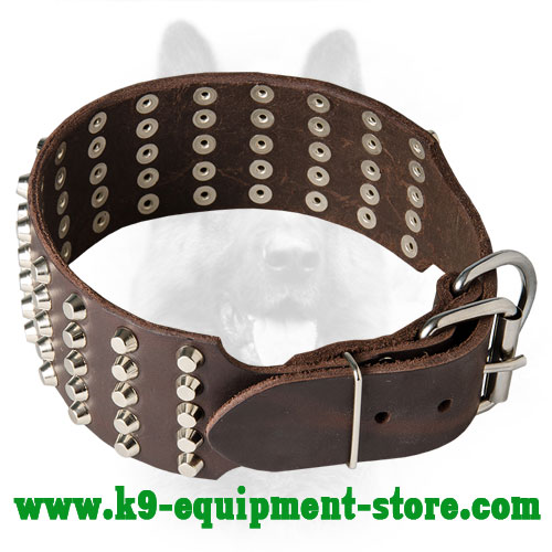 Canine Wide Leather Collar with Riveted Fittings