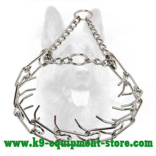 Canine Steel Prong Collar with Chain and 2 Rings