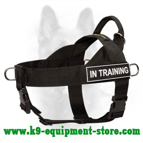 Dog Training Equipment For Sale In Cape Town