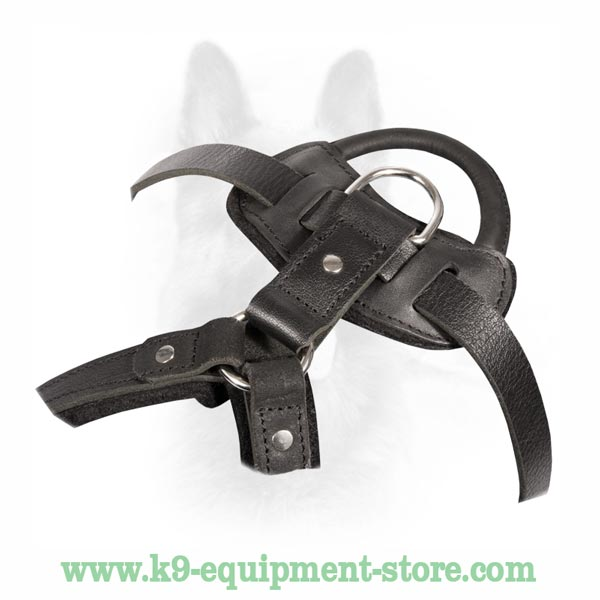 Dog Harness With Polished Brass Fittings