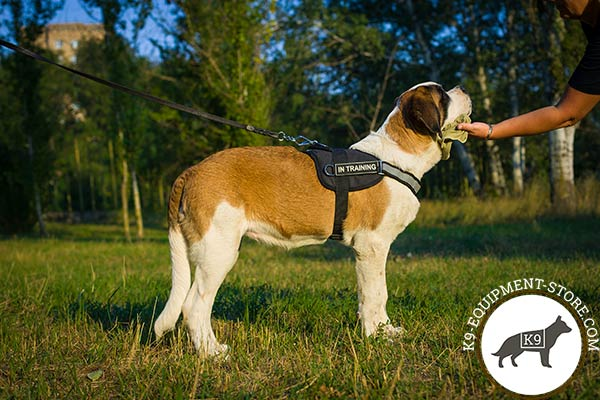Moscow Watchdog nylon harness