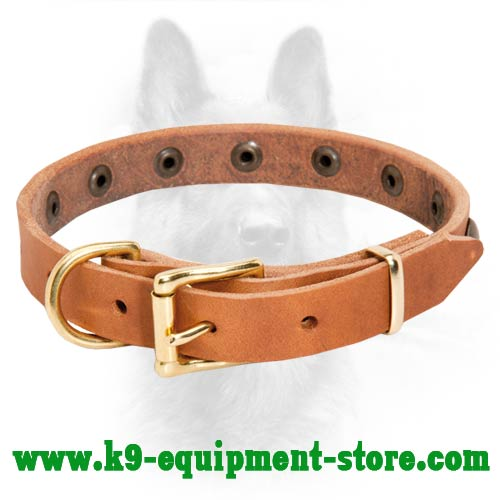 Brass Studded Leather Canine Collar
