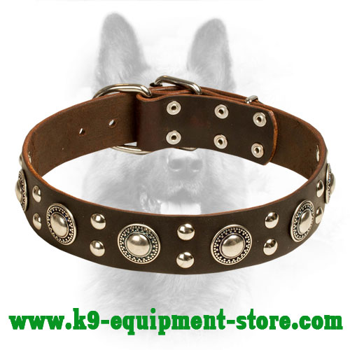 ''Rock n Roll'' Leather K9 Collar Decorated with Steel Circles