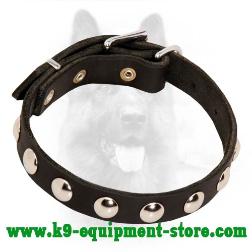 Leather Canine Collar with Round Studs