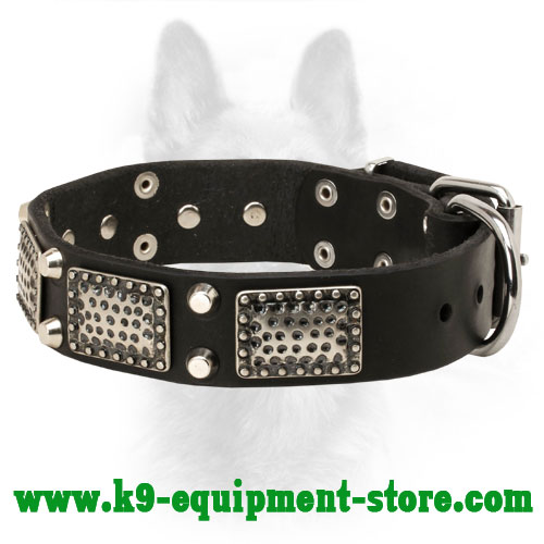 Leather K9 Collar with Nickel-Plated Decorative Elements
