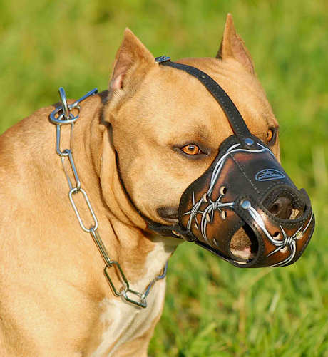Protection Training Leather Police Dog Muzzle Barbed Wire Painted