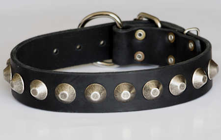black leather dog collar with studs