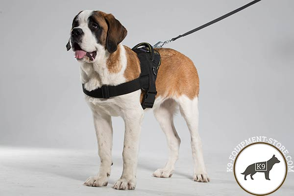 Moscow-Watchdog nylon-leash with corrosion resistant hardware for daily activity