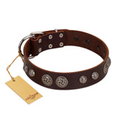 """Choco Brownie"" FDT Artisan Brown Leather dog Collar Adorned with Silver-Like Conchos"