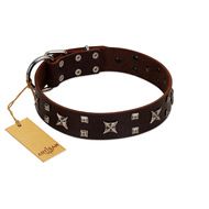 """Bigwig Woof"" FDT Artisan Brown Leather dog Collar with Chrome Plated Stars and Square Studs"