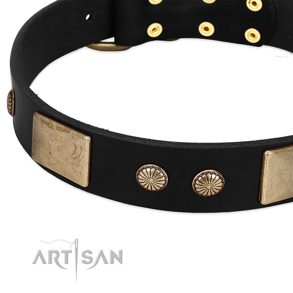 Leather dog collar with adornments for stylish walking