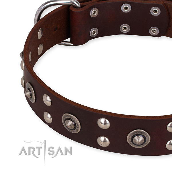 Full grain natural leather collar with corrosion resistant fittings for your attractive dog