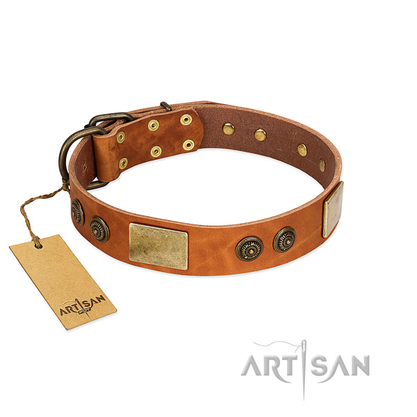 Extraordinary full grain leather dog collar for basic training