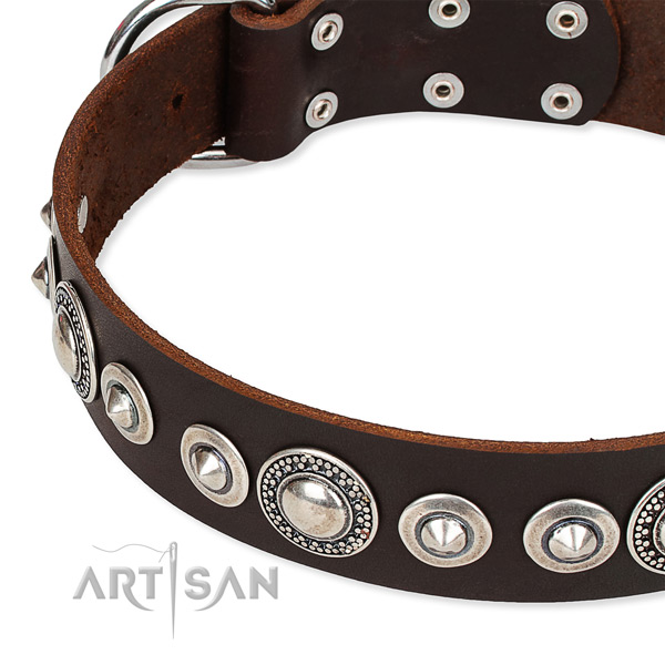 Basic training studded dog collar of high quality full grain leather