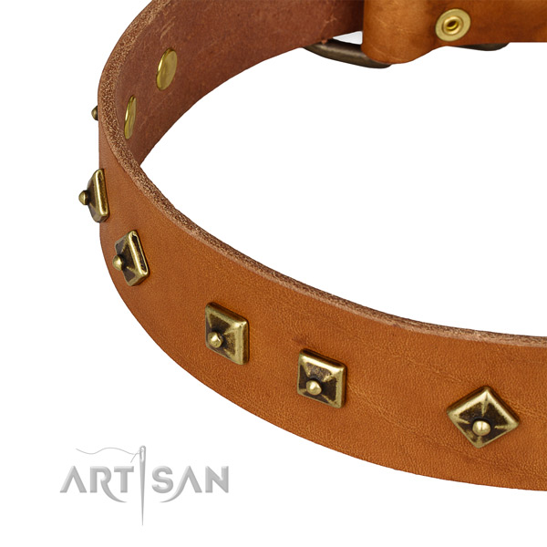 Remarkable leather collar for your lovely pet