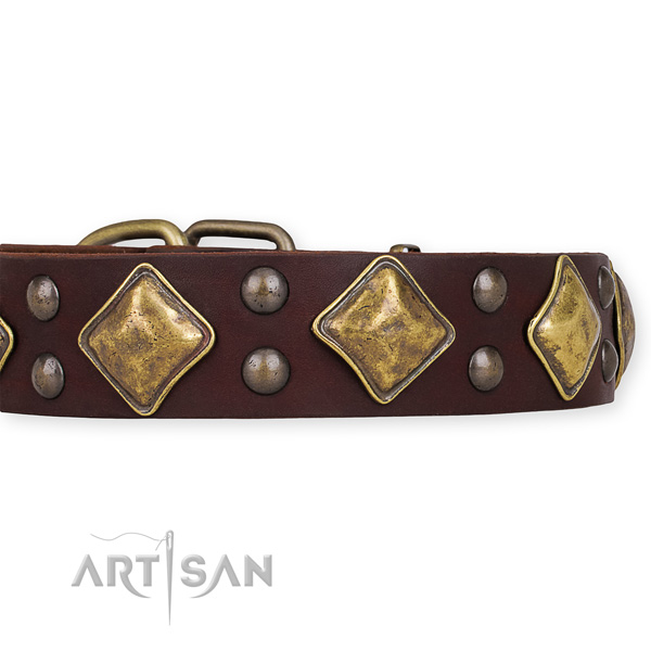 Genuine leather dog collar with awesome rust-proof adornments