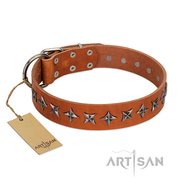 Stylish walking dog collar of strong leather with decorations