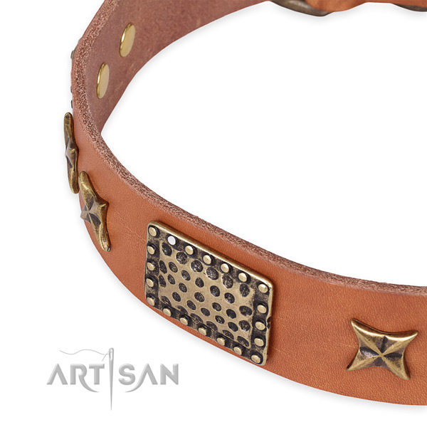 Leather collar with rust resistant fittings for your impressive doggie