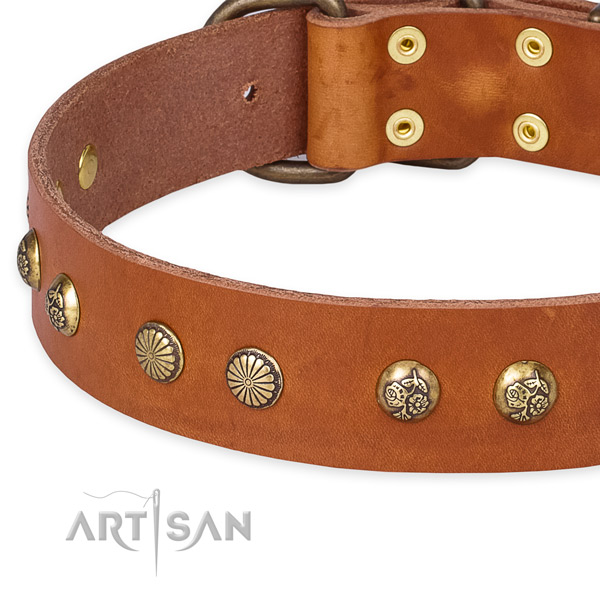 Leather collar with corrosion proof buckle for your attractive canine
