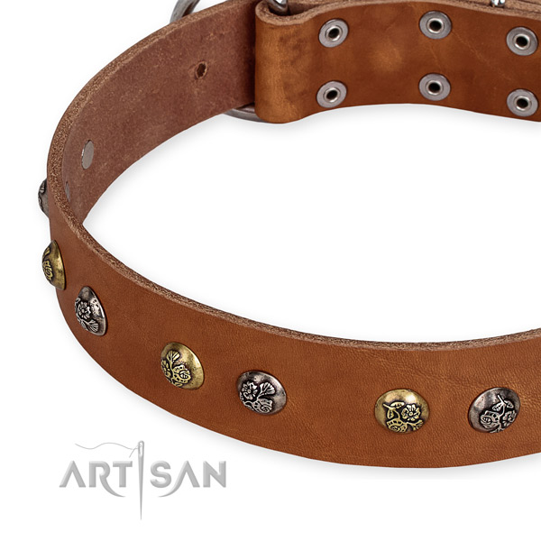 Full grain genuine leather dog collar with inimitable corrosion proof studs