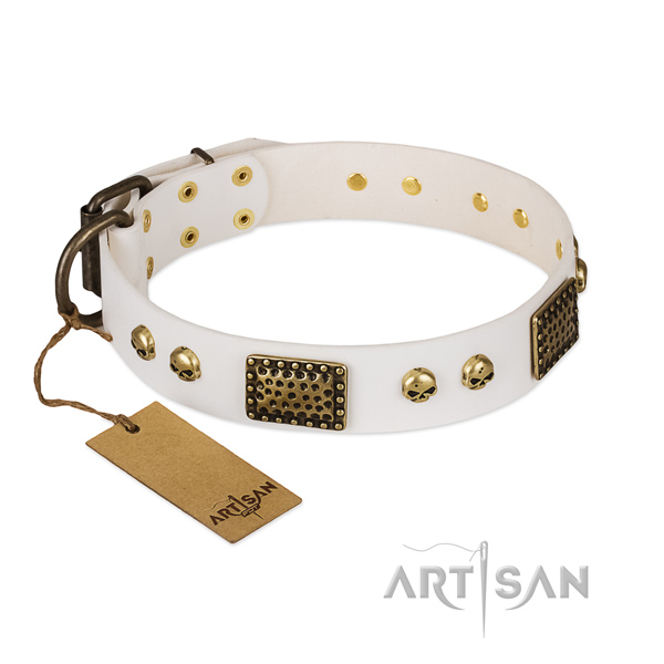 Corrosion resistant embellishments on everyday walking dog collar