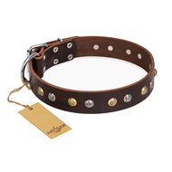 """Golden""n""Silver Luxury"" FDT Artisan Leather dog Collar with Engraved Studs"