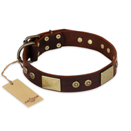 """Shining Armour"" FDT Artisan Brown Leather dog Collar with Decorations"