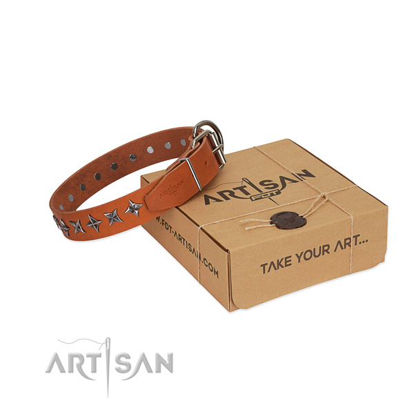 Basic training dog collar of durable full grain natural leather with studs