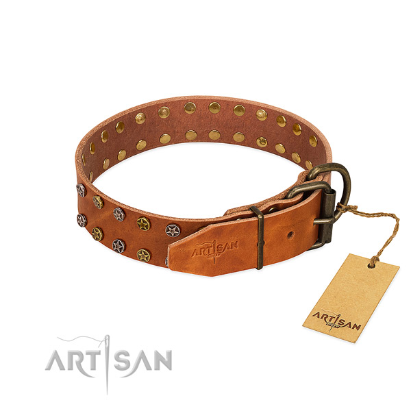 Stylish walking full grain genuine leather dog collar with trendy embellishments