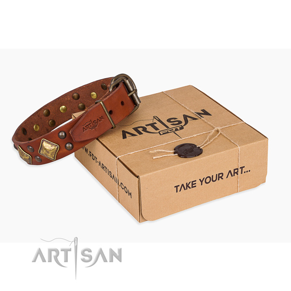 Everyday walking dog collar with Stunning rust-proof studs
