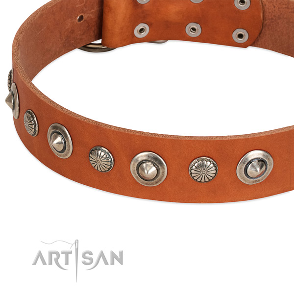 Awesome decorated dog collar of strong natural leather