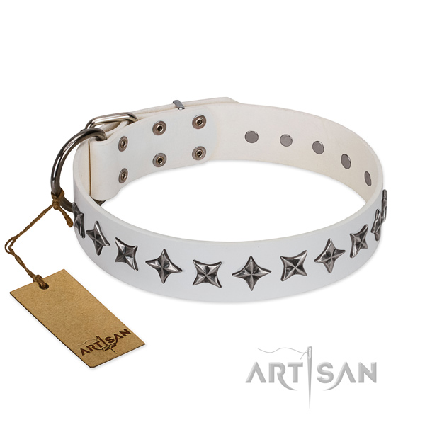 Daily walking dog collar of finest quality full grain leather with studs