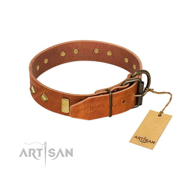 Comfy wearing genuine leather dog collar with impressive adornments