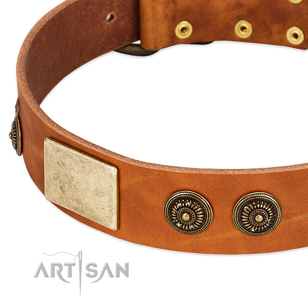 Stylish dog collar crafted for your stylish four-legged friend