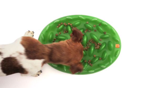 Green Lawn K9 Interactive Feeder