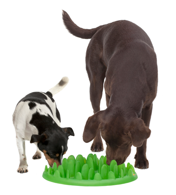 Plastic Feeder for K9 Slow Eating