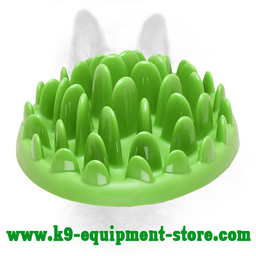 K9 Feeder for Wet and Dry Food Consumption